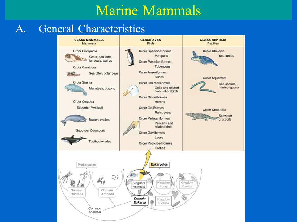 Marine Mammals A.General Characteristics