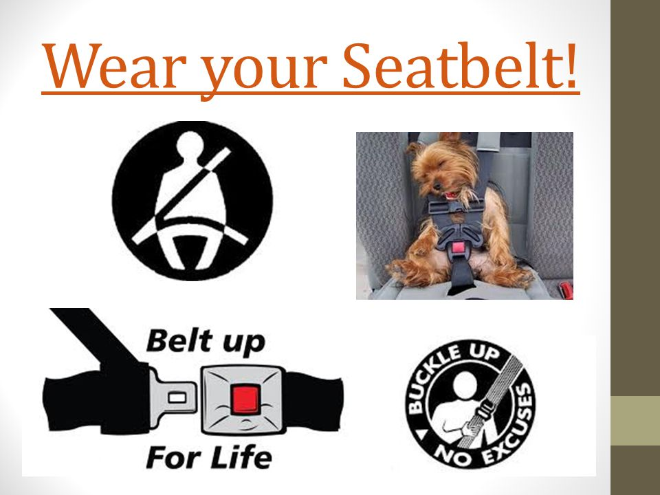 Wear your Seatbelt!