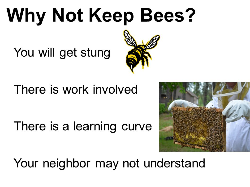 Why Not Keep Bees? You will get stung There is work involved There is a learning curve Your neighbor may not understand