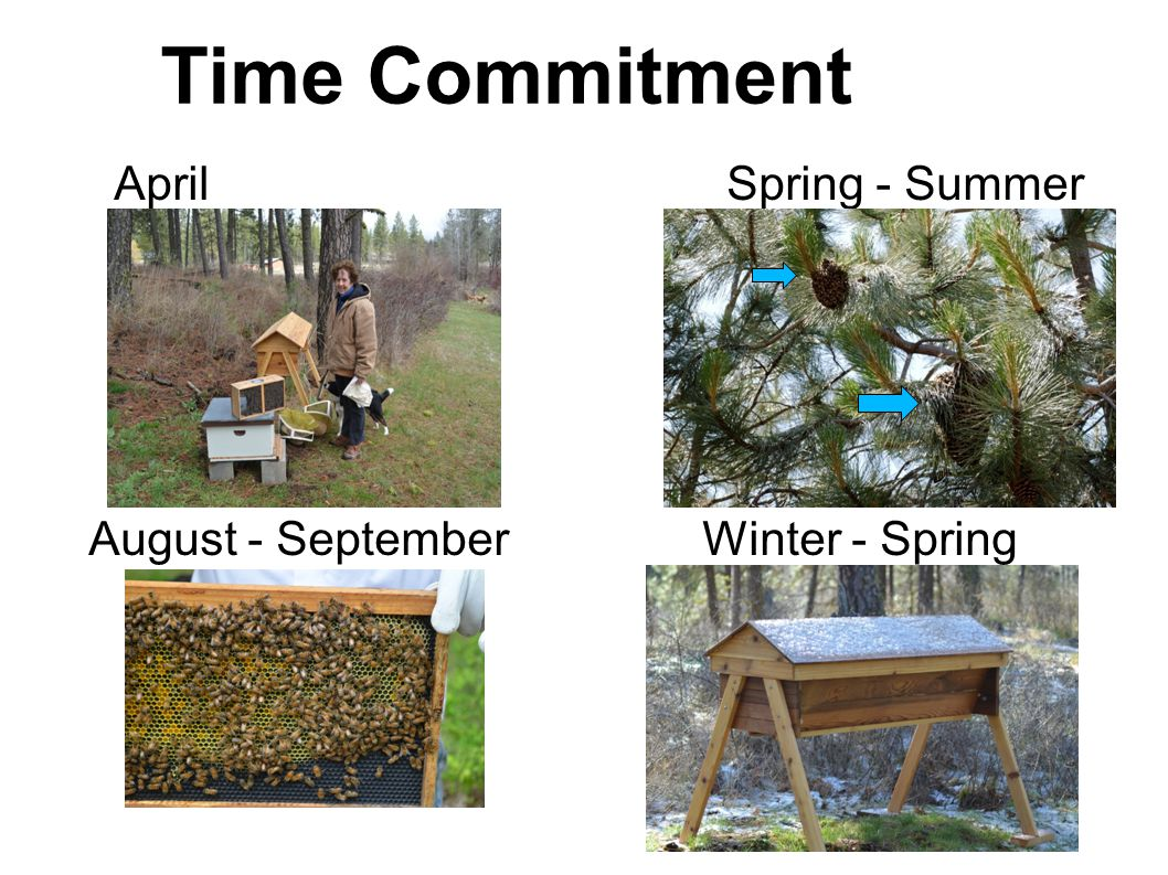 Time Commitment April Spring - Summer August - September Winter - Spring