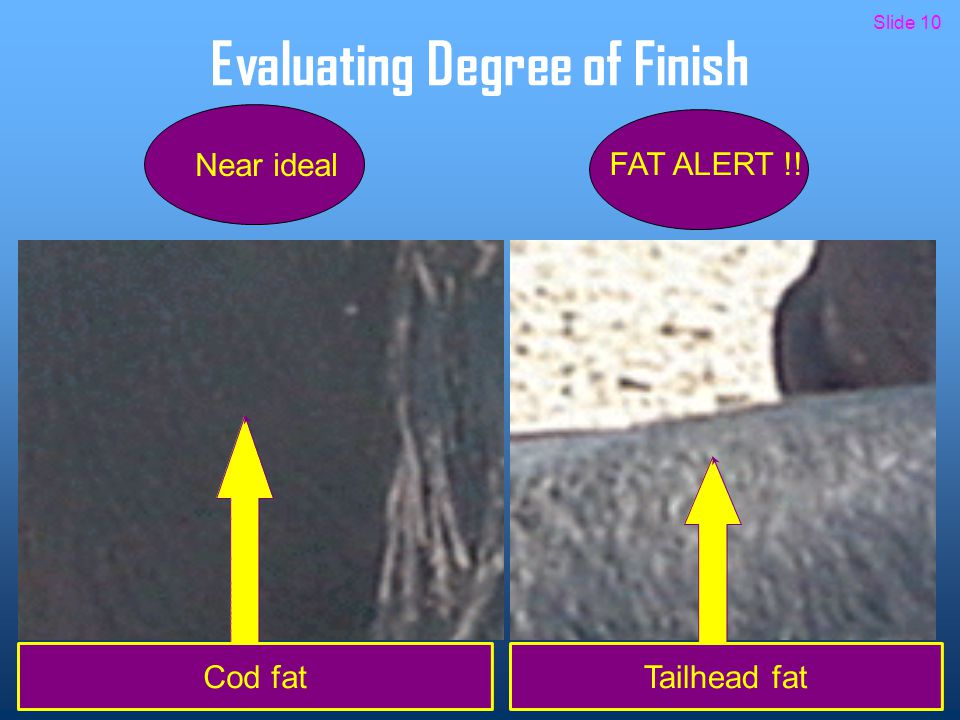 Evaluating Degree of Finish Cod fat Near ideal FAT ALERT !! Tailhead fat Slide 10