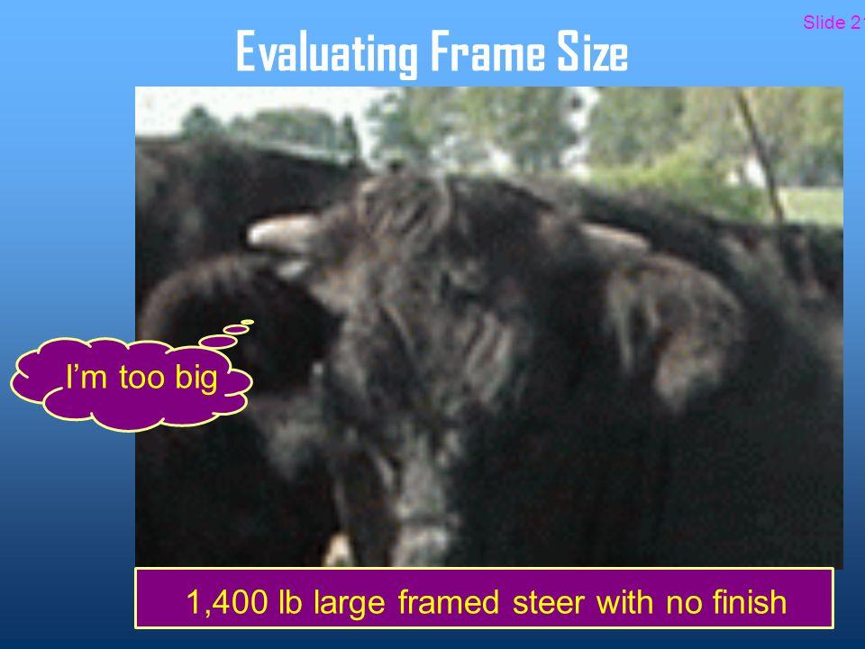 Evaluating Frame Size 1,400 lb large framed steer with no finish I'm too big Slide 21