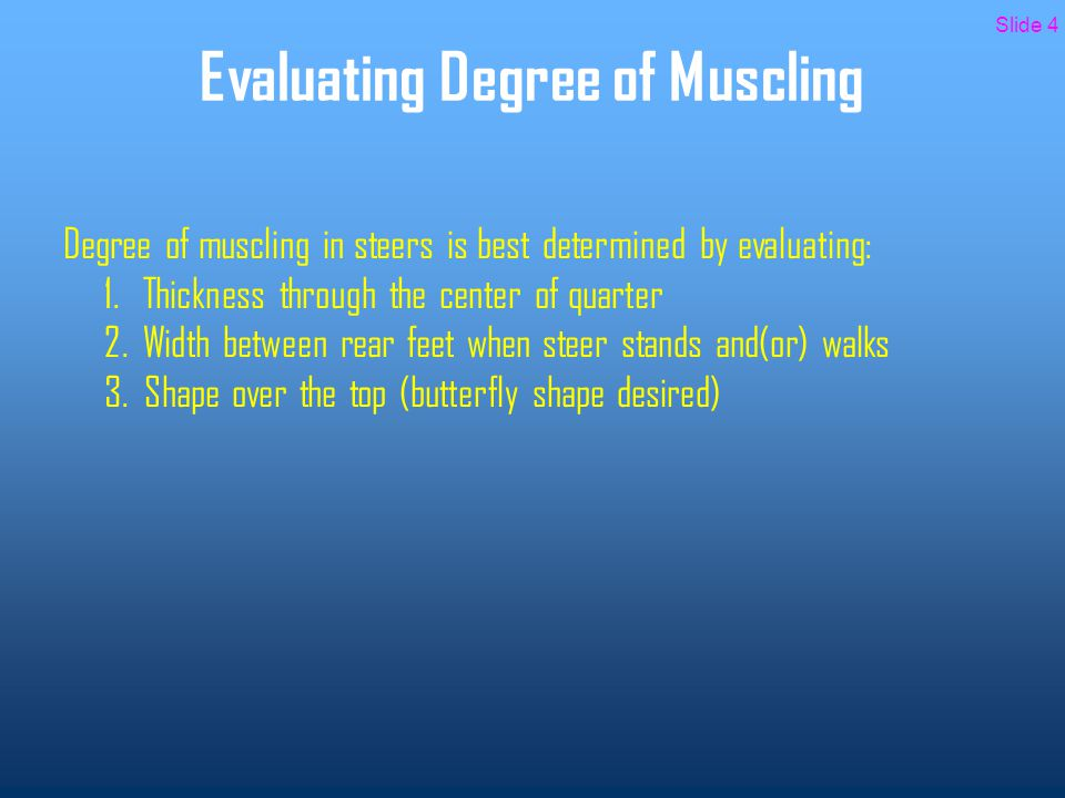 Evaluating Degree of Muscling Thin Muscle Very narrow width Average Muscle Average width Thick Muscle Good width Super Thick Very good width Slide 5