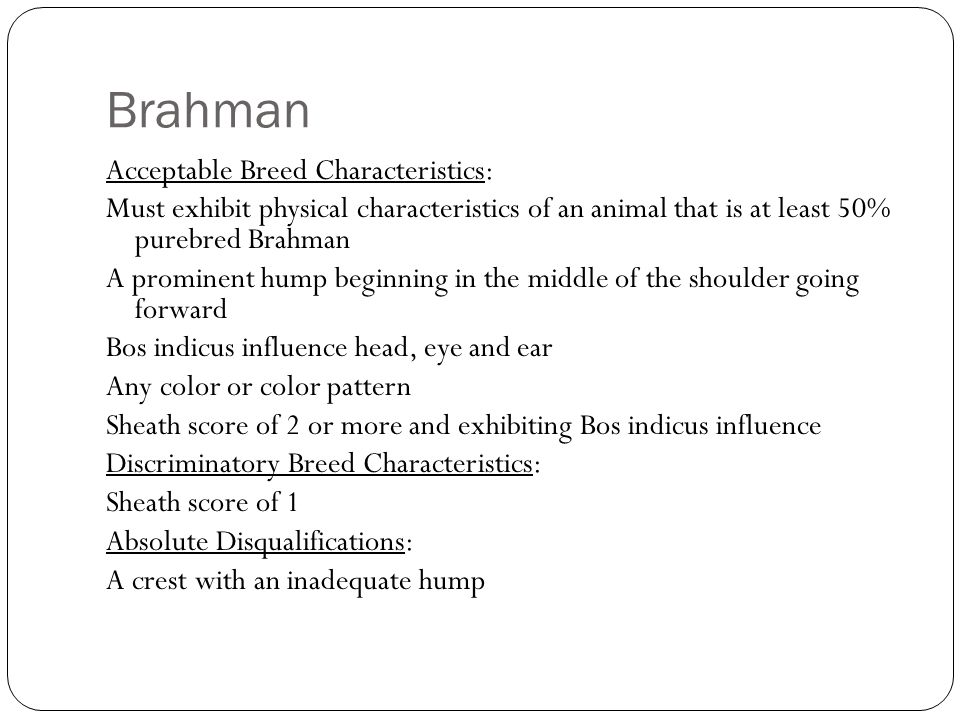 Acceptable Breed Characteristics: Must exhibit physical characteristics of an animal that is at least 50% purebred Brahman A prominent hump beginning in the middle of the shoulder going forward Bos indicus influence head, eye and ear Any color or color pattern Sheath score of 2 or more and exhibiting Bos indicus influence Discriminatory Breed Characteristics: Sheath score of 1 Absolute Disqualifications: A crest with an inadequate hump