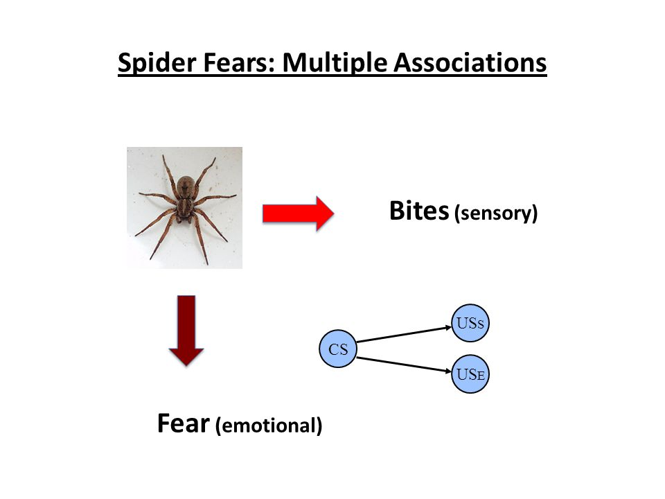 Spider Fears: Multiple Associations Bites (sensory) Fear (emotional) CS US S US E