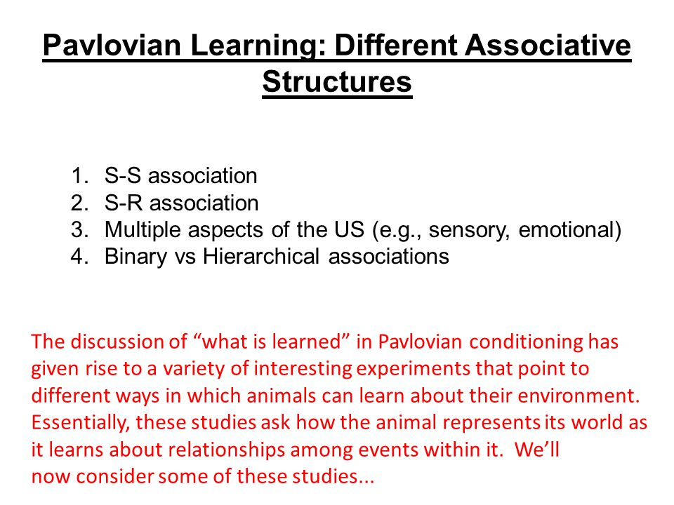 Pavlovian Learning: Different Associative Structures 1.S-S association 2.S-R association 3.Multiple aspects of the US (e.g., sensory, emotional) 4.Binary vs Hierarchical associations The discussion of what is learned in Pavlovian conditioning has given rise to a variety of interesting experiments that point to different ways in which animals can learn about their environment.