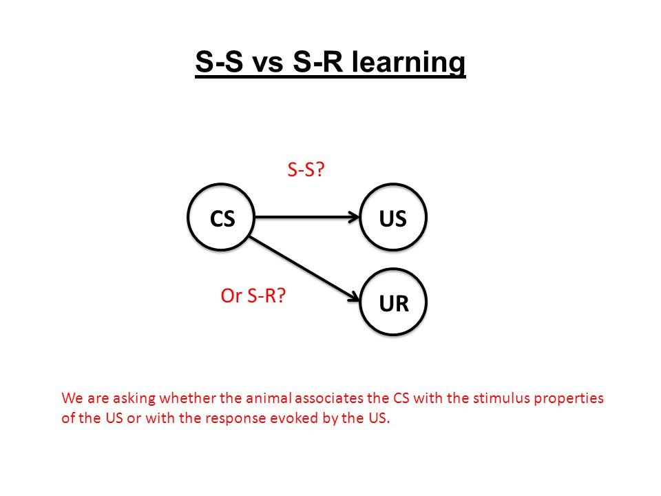 S-S vs S-R learning CSUS UR S-S? Or S-R? We are asking whether the animal associates the CS with the stimulus properties of the US or with the respons