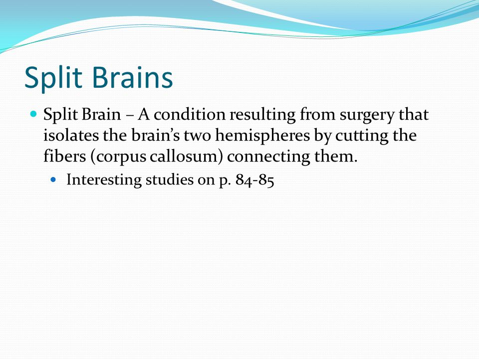 Split Brains Split Brain – A condition resulting from surgery that isolates the brain's two hemispheres by cutting the fibers (corpus callosum) connec