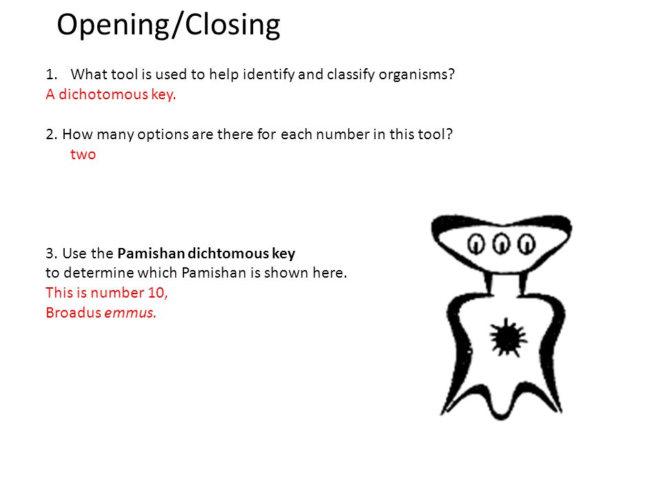 Opening/Closing- Using your Pamishan Dichotomous Key homework sheet, identify this Pamishan.