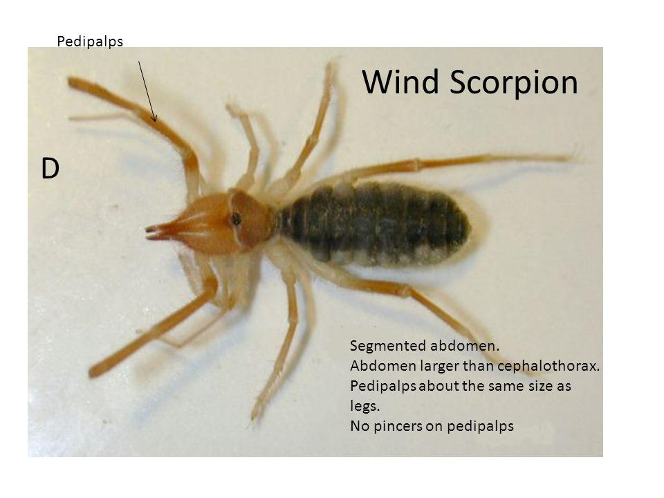 Scorpion C