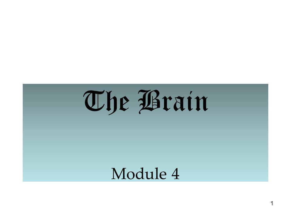 1 The Brain Module 4