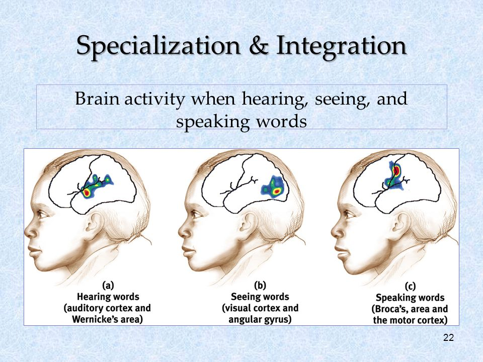 22 Specialization & Integration Brain activity when hearing, seeing, and speaking words