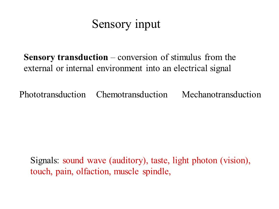 Sensory input Sensory transduction – conversion of stimulus from the external or internal environment into an electrical signal Signals: sound wave (auditory), taste, light photon (vision), touch, pain, olfaction, muscle spindle, PhototransductionChemotransductionMechanotransduction