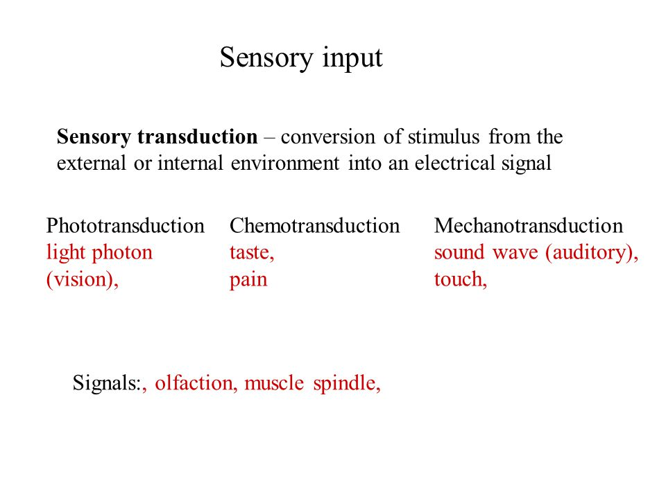 Sensory input Sensory transduction – conversion of stimulus from the external or internal environment into an electrical signal Signals:, olfaction, muscle spindle, Phototransduction light photon (vision), Chemotransduction taste, pain Mechanotransduction sound wave (auditory), touch,
