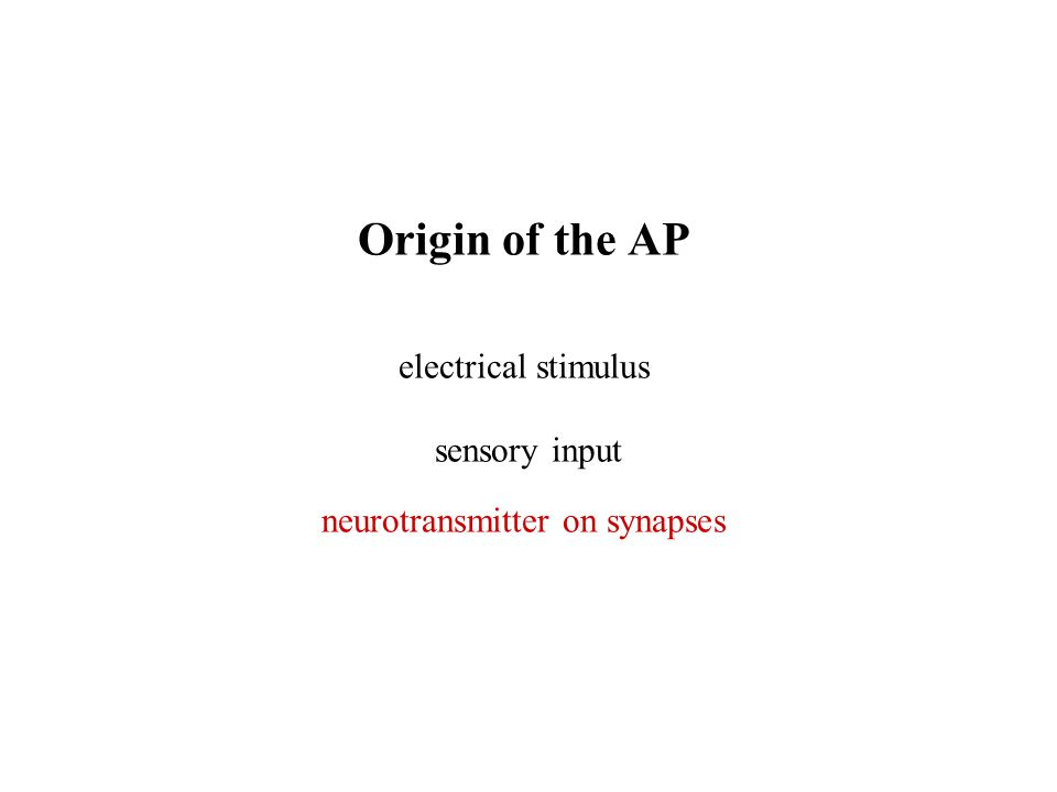 Origin of the AP electrical stimulus sensory input neurotransmitter on synapses