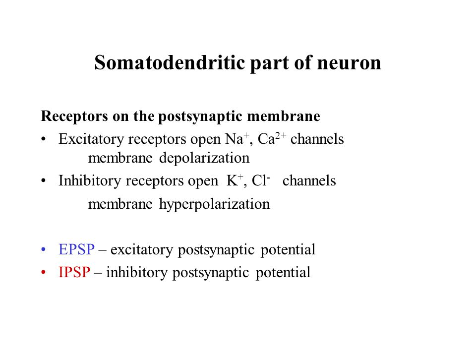 Somatodendritic part of neuron Receptors on the postsynaptic membrane Excitatory receptors open Na +, Ca 2+ channels membrane depolarization Inhibitory receptors open K +, Cl - channels membrane hyperpolarization EPSP – excitatory postsynaptic potential IPSP – inhibitory postsynaptic potential