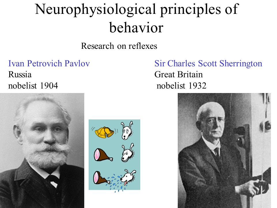 Neurophysiological principles of behavior Ivan Petrovich Pavlov Russia nobelist 1904 Research on reflexes Sir Charles Scott Sherrington Great Britain