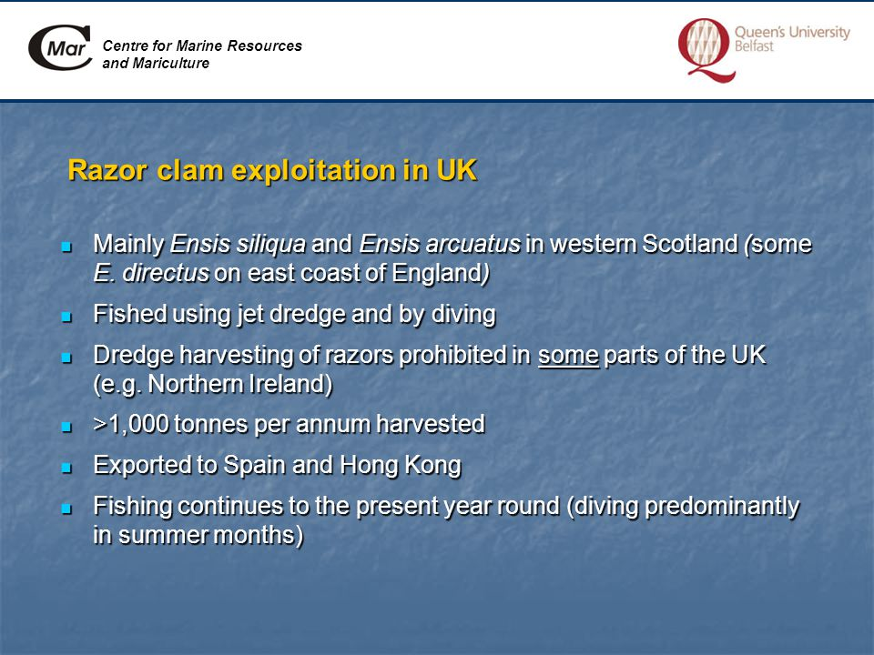 Centre for Marine Resources and Mariculture Razor clam exploitation in UK Mainly Ensis siliqua and Ensis arcuatus in western Scotland (some E.