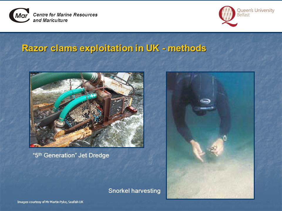 Centre for Marine Resources and Mariculture Razor clams exploitation in UK - methods 5 th Generation Jet Dredge Snorkel harvesting Images courtesy of Mr Martin Pyke, Seafish UK