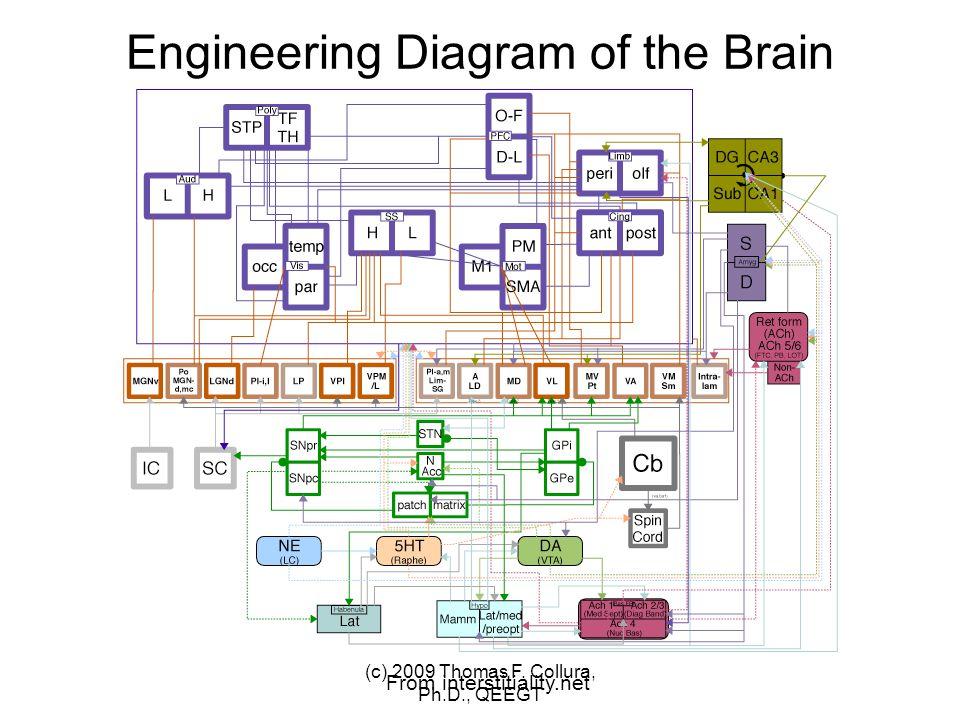 C3 C4 (c) 2009 Thomas F. Collura, Ph.D., QEEGT