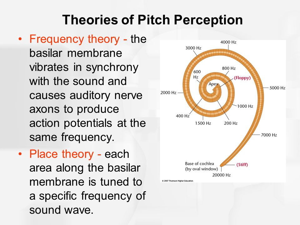 Theories of Pitch Perception Frequency theory - the basilar membrane vibrates in synchrony with the sound and causes auditory nerve axons to produce a