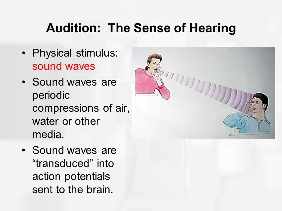 "Audition: The Sense of Hearing Physical stimulus: sound waves Sound waves are periodic compressions of air, water or other media. Sound waves are ""tra"