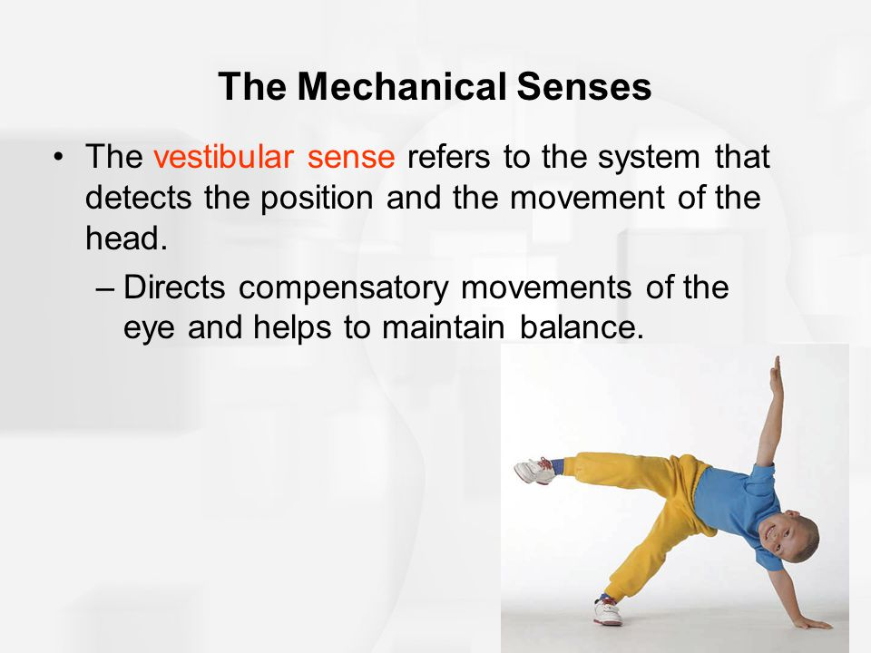 The Mechanical Senses The vestibular sense refers to the system that detects the position and the movement of the head. –Directs compensatory movement