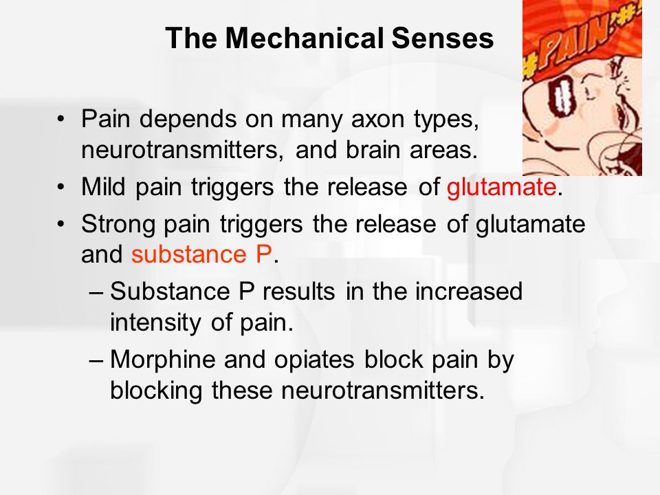 The Mechanical Senses Pain depends on many axon types, neurotransmitters, and brain areas. Mild pain triggers the release of glutamate. Strong pain tr
