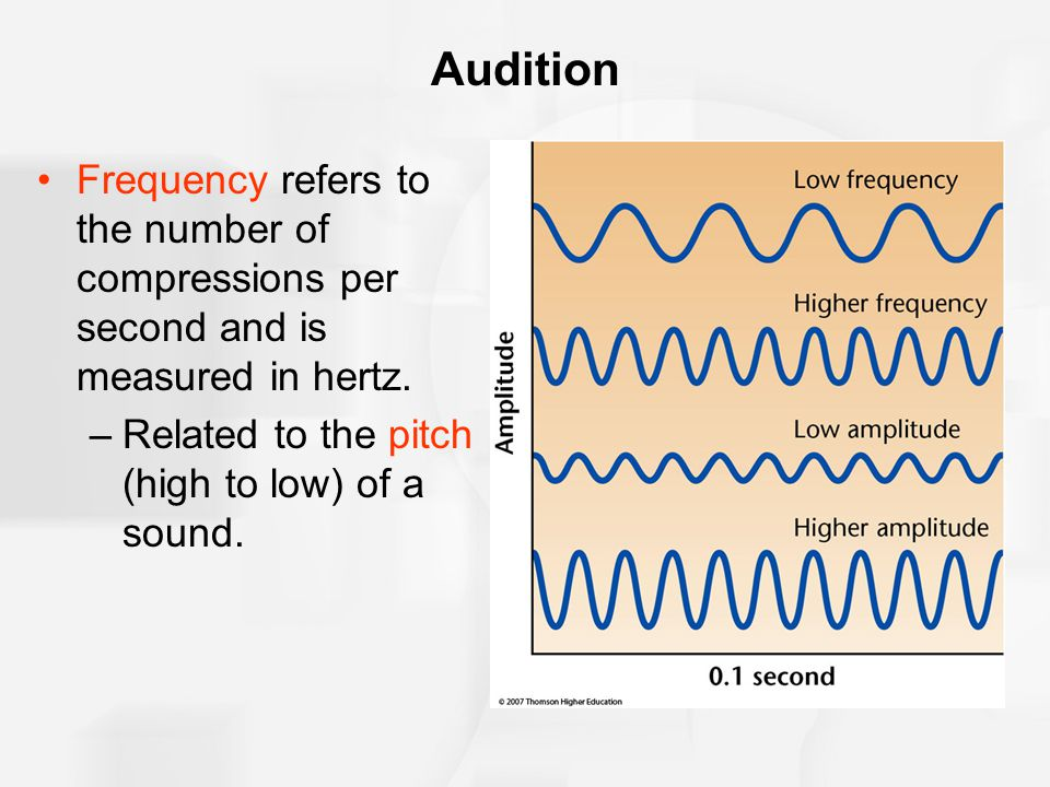 Audition Frequency refers to the number of compressions per second and is measured in hertz. –Related to the pitch (high to low) of a sound.
