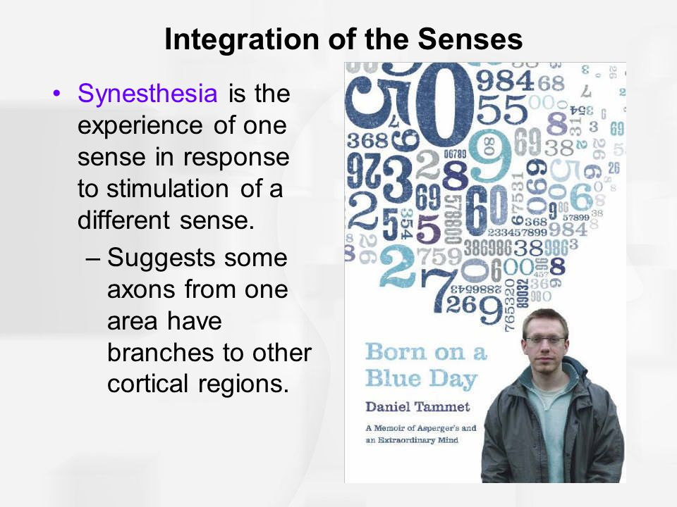 Integration of the Senses Synesthesia is the experience of one sense in response to stimulation of a different sense. –Suggests some axons from one ar