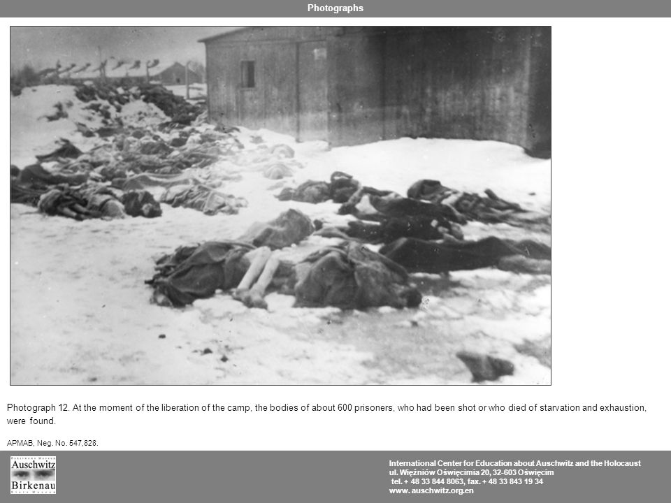 Photograph 12. At the moment of the liberation of the camp, the bodies of about 600 prisoners, who had been shot or who died of starvation and exhaust