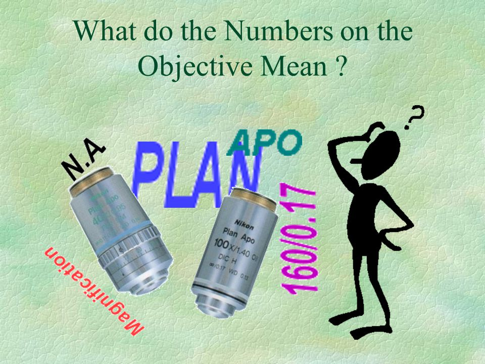 PLAN §This means that the focal plane of the objective is flat