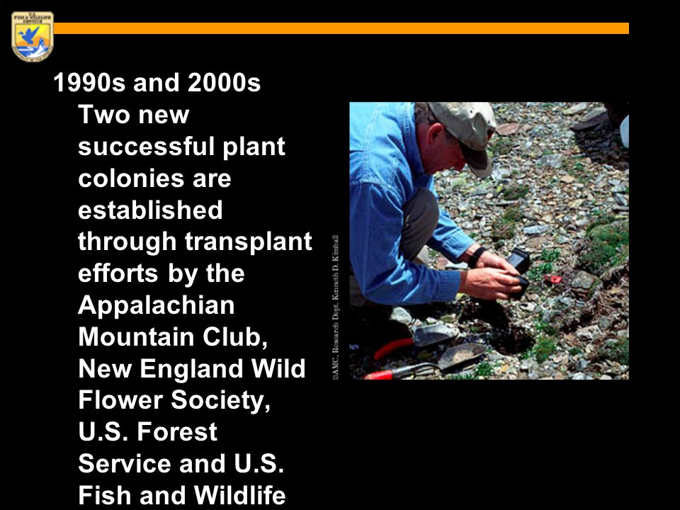 1990s and 2000s Two new successful plant colonies are established through transplant efforts by the Appalachian Mountain Club, New England Wild Flower Society, U.S.