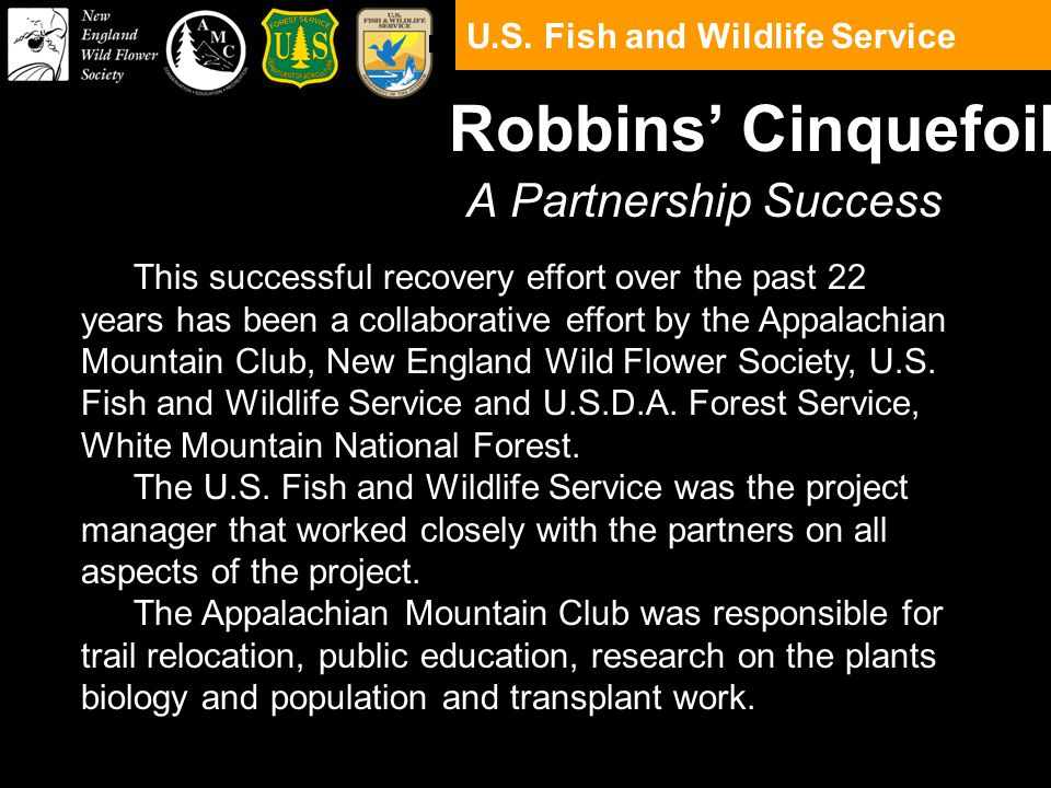 A Partnership Success Robbins' Cinquefoil This successful recovery effort over the past 22 years has been a collaborative effort by the Appalachian Mountain Club, New England Wild Flower Society, U.S.
