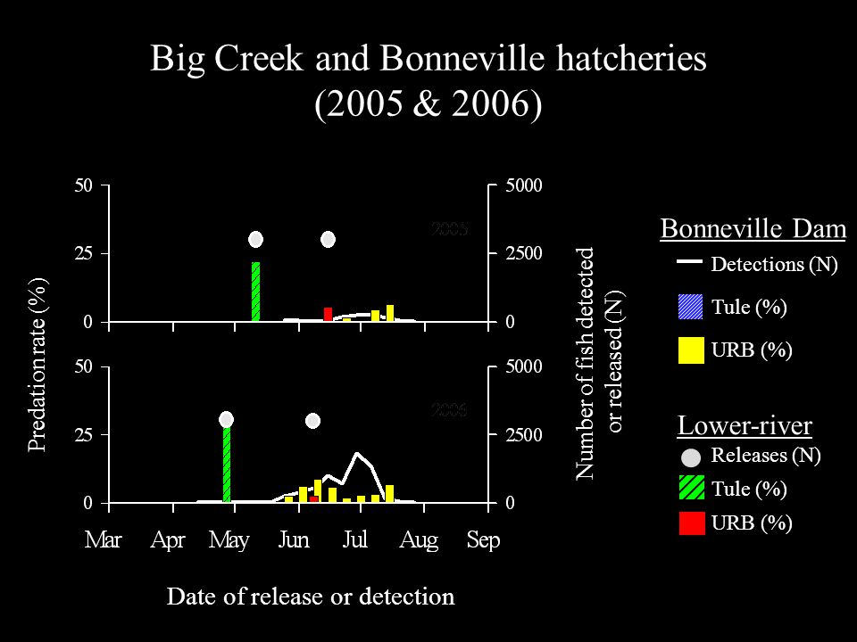 Big Creek and Bonneville hatcheries (2005 & 2006) Predation rate (%) Number of fish detected or released (N) Date of release or detection Detections (