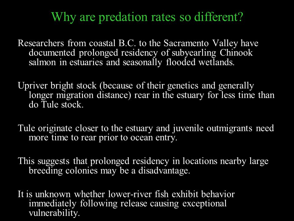Why are predation rates so different? Researchers from coastal B.C. to the Sacramento Valley have documented prolonged residency of subyearling Chinoo