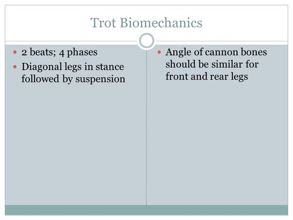 Trot Biomechanics 2 beats; 4 phases Diagonal legs in stance followed by suspension Angle of cannon bones should be similar for front and rear legs