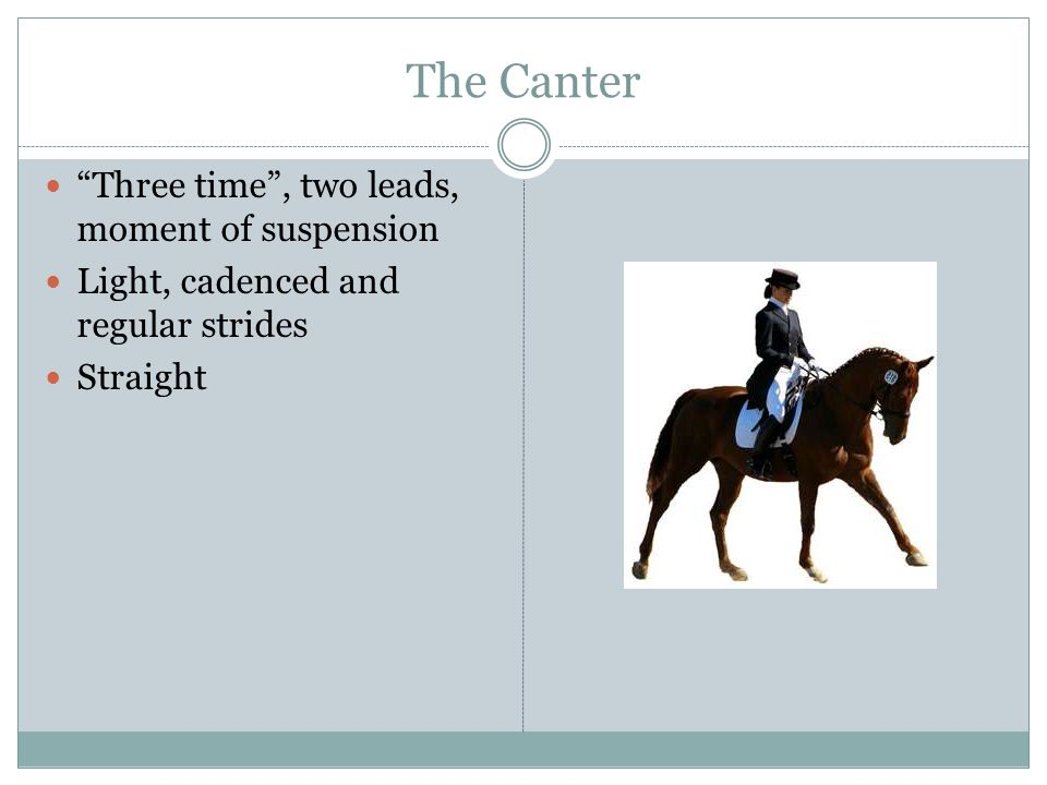 The Canter Three time , two leads, moment of suspension Light, cadenced and regular strides Straight