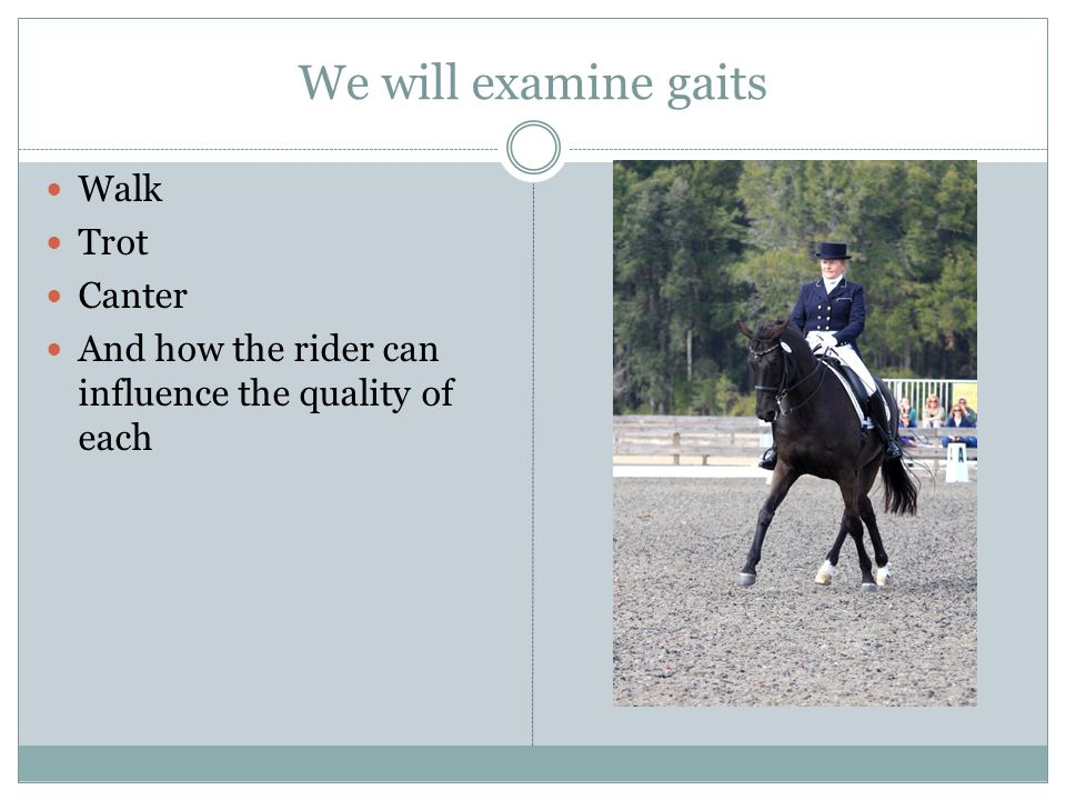 We will examine gaits Walk Trot Canter And how the rider can influence the quality of each