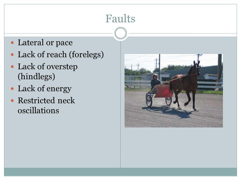 Faults Lateral or pace Lack of reach (forelegs) Lack of overstep (hindlegs) Lack of energy Restricted neck oscillations