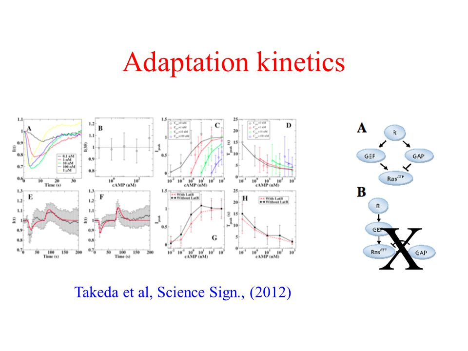 Adaptation kinetics Takeda et al, Science Sign., (2012) X