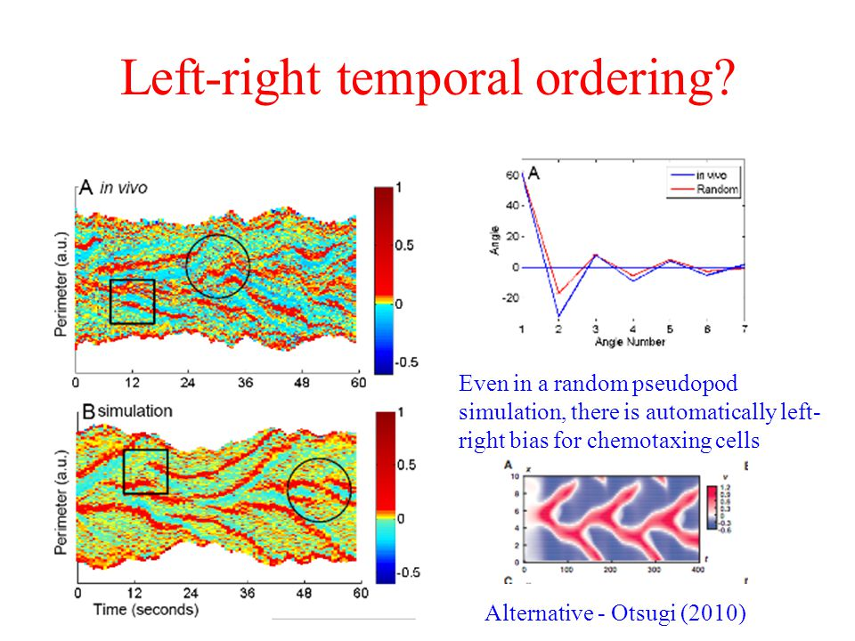 Left-right temporal ordering.