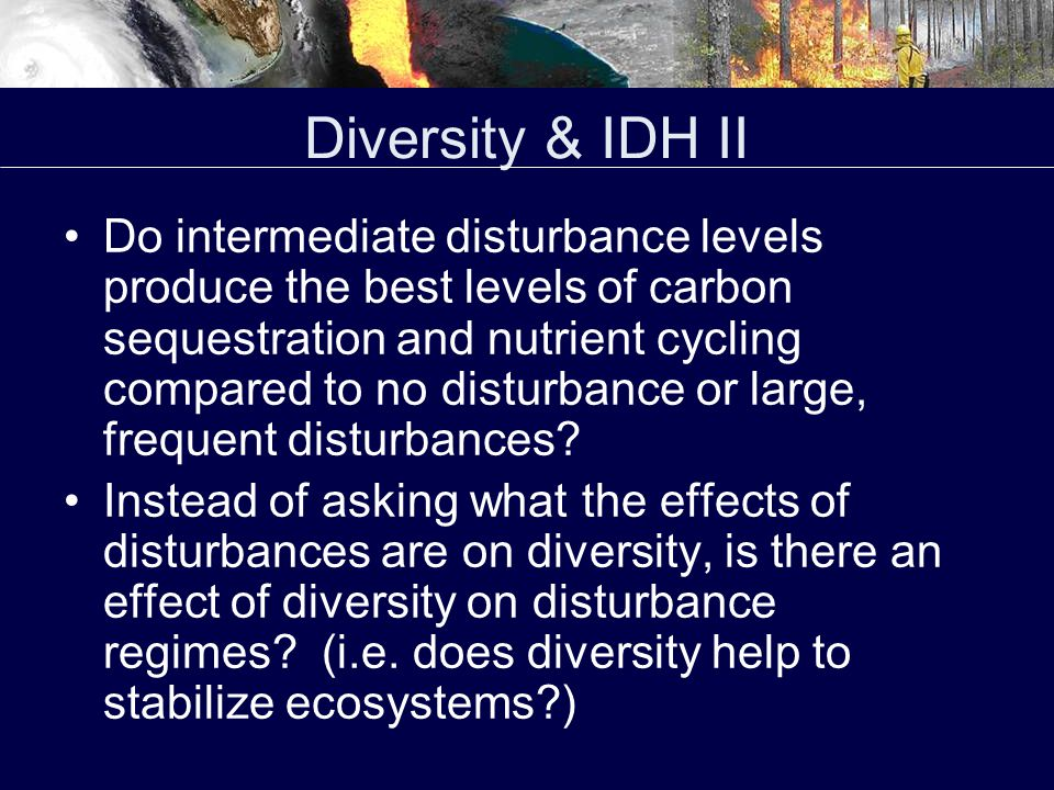 Diversity & IDH III If IDH does operate, what is its effect on diversity relative to other effects.