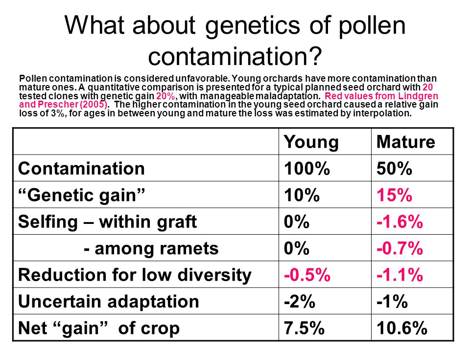 What about genetics of pollen contamination? Pollen contamination is considered unfavorable. Young orchards have more contamination than mature ones.