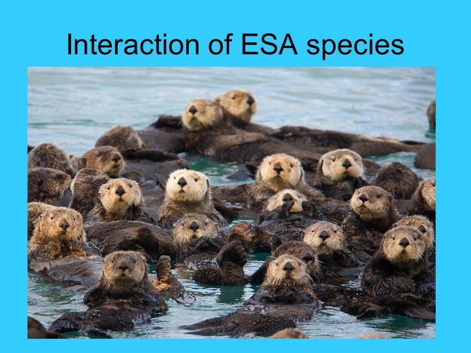 Interaction of ESA species
