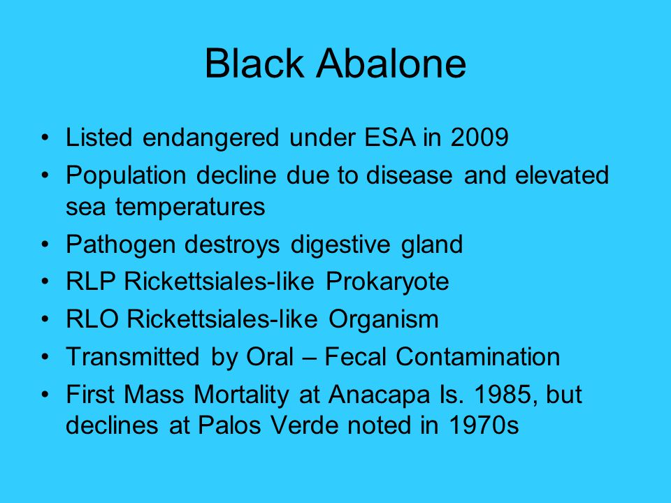 Black Abalone Listed endangered under ESA in 2009 Population decline due to disease and elevated sea temperatures Pathogen destroys digestive gland RL