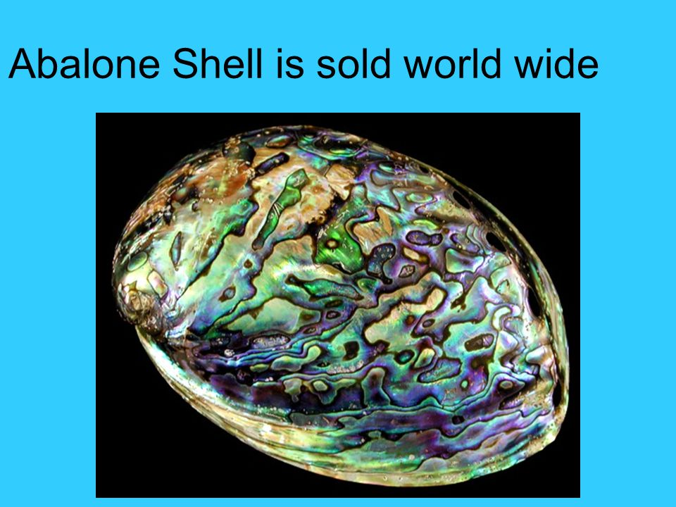 Abalone Shell is sold world wide