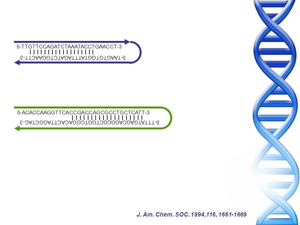 5-TTGTTCCAGATCTAAATACCTGAACCT-3 5-ACACCAAGGTTCACCGACCAGCGCCTGCTCATT-3 5-TTTATGAGCAGGCGCTGGTCGGACACTTAGGCTAC-3 5-TAAGTGTGGTATTTAGATCTGGAACTT-3 J.