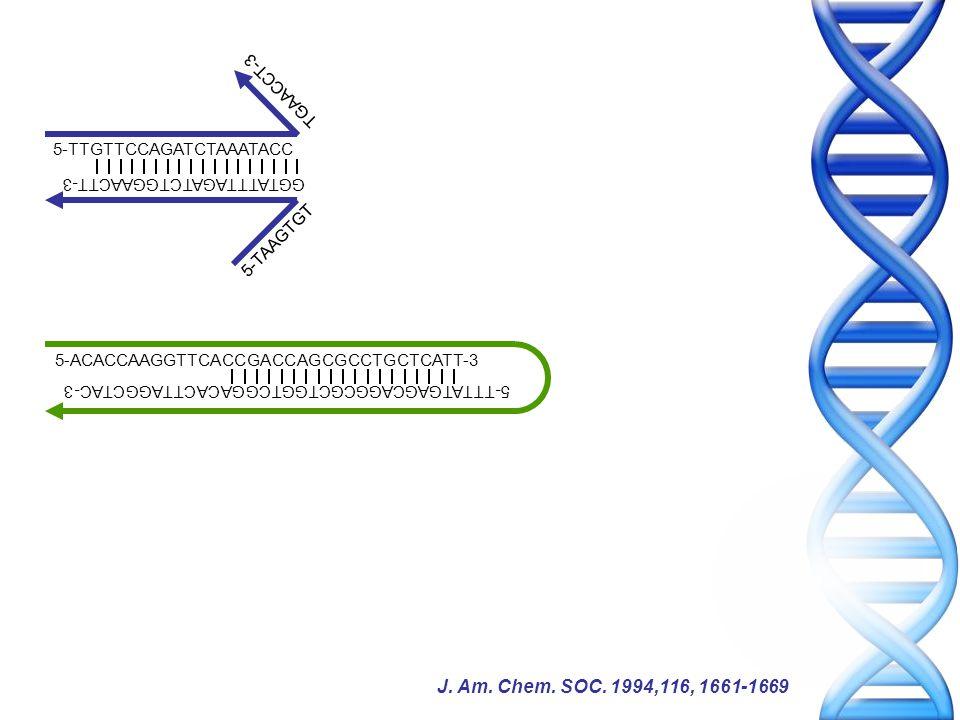 5-TTGTTCCAGATCTAAATACC 5-ACACCAAGGTTCACCGACCAGCGCCTGCTCATT-3 5-TTTATGAGCAGGCGCTGGTCGGACACTTAGGCTAC-3 GGTATTTAGATCTGGAACTT-3 5-TAAGTGT TGAACCT-3 J.