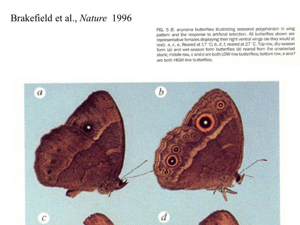 Brakefield et al., Nature 1996